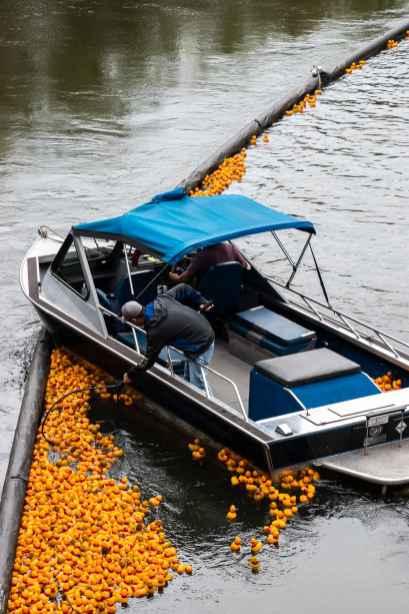 picking up the winning ducks