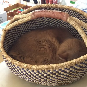 A Somali cat curled up in a basket