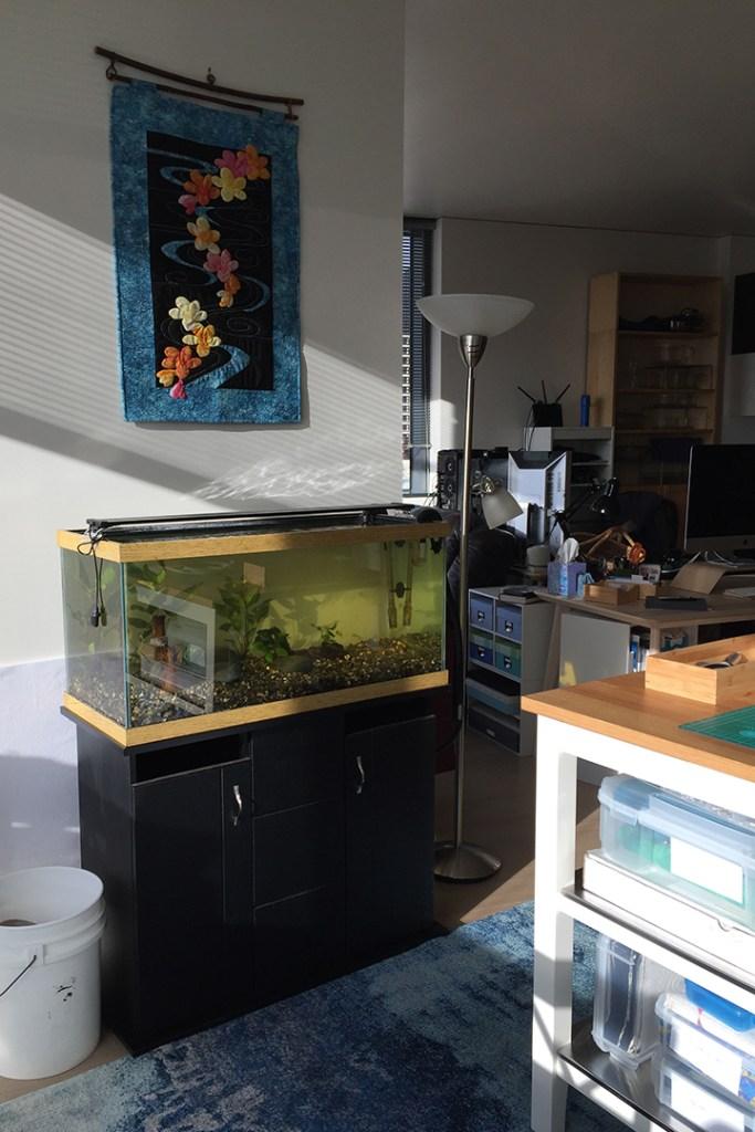 a planted aquarium