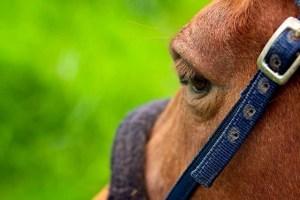 horseback riding Quimby Country