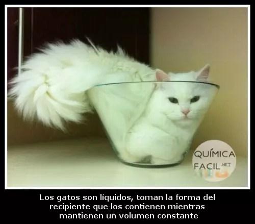 El gran misterio científico que son los gatos. Visítanos para más humor químico