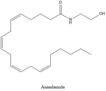 Estructura de la anandamida