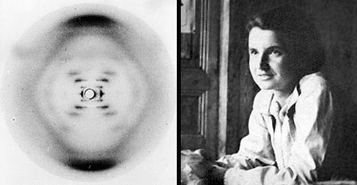 Rosalind Franklin junto y la fotografía 51
