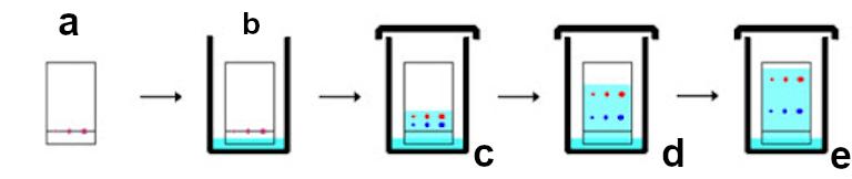 Figura 3: Secuencia de cromatografía genérica para el compuesto X: a) Adsorción, b) Exposición a una fase móvil, c) La muestra X rompe su sujeción a la fase estacionaria y viaja, d) Movimiento con la fase móvil, e) reinteracción con la fase estacionaria.