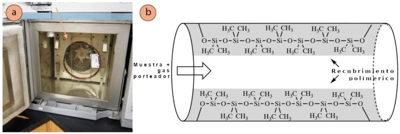 Figura 1: a) Equipo de cromatografía abierto para mostrar el horno y la columna: la columna de vidrio se indica con una flecha, y parece una fina bobina de cobre, b) Esquema del revestimiento interior de dimetilpolisiloxano de una columna de cromatografía.