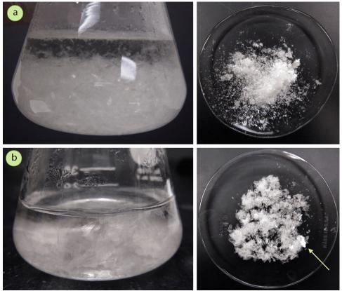 Figura 2: a) Estos cristales de acetanilida formados a partir de agua son perfectamente aceptables, pero pequeños, b) Estos cristales de acetanilida crecieron mucho más lentamente, y son más grandes (nótese el cristal indicado con la flecha).
