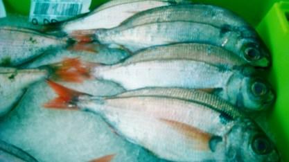 pescado congelado6