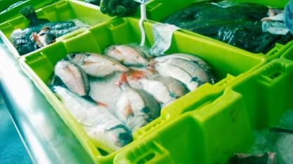 pescado congelado8