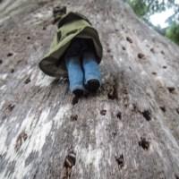Gwaii Haanas Forest Plants