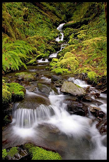 Quinault Rain Forest Photo Gallery