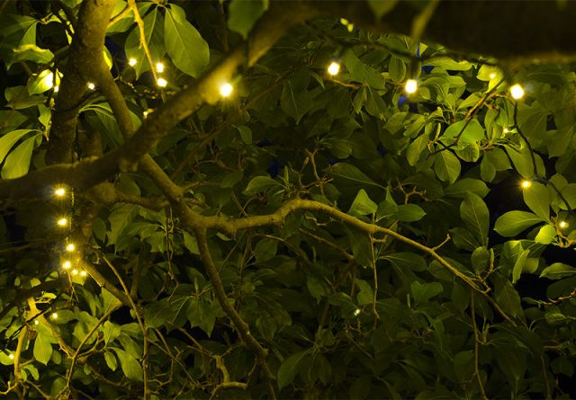 Outdoor Lighting - LED lights on trees - quinju.com
