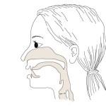 """Na articulação """"Te"""" a língua se posiciona logo atrás dos dentes incisivos"""