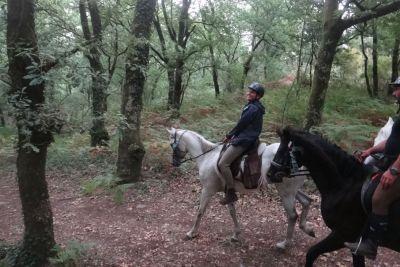 cavalos-6