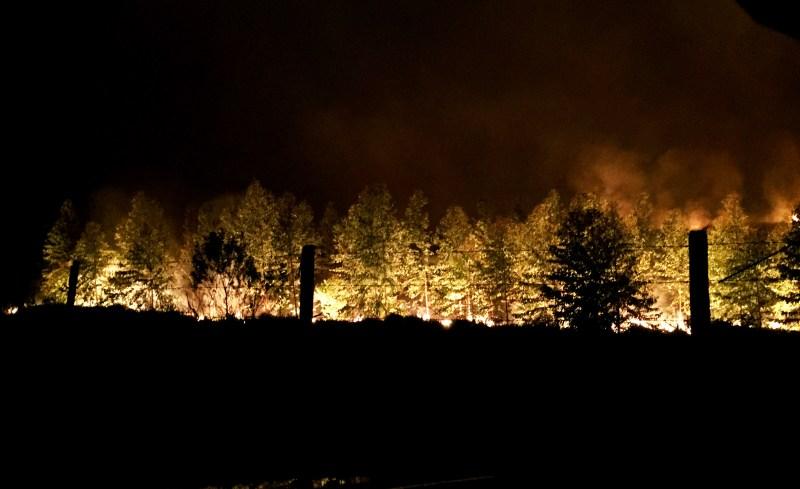 fogo no eucalipto