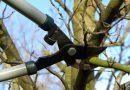 A importância da poda na Agrofloresta-Regeneração e crescimento