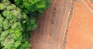 Como fazer um sistema agroflorestal sintrópico sem irrigação com foco em frutas e anuais?