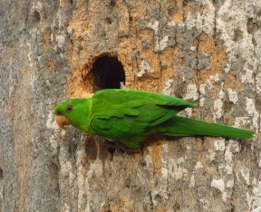 Green Parakeet cavity by John Brush