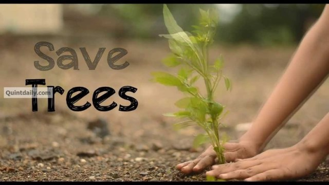 save trees speech for kids Save trees essay for class 1, 2, 3, 4, 5, 6, 7, 8, 9, 10, 11 and 12 find paragraph, long and short essay on save trees for your kids, children and students.