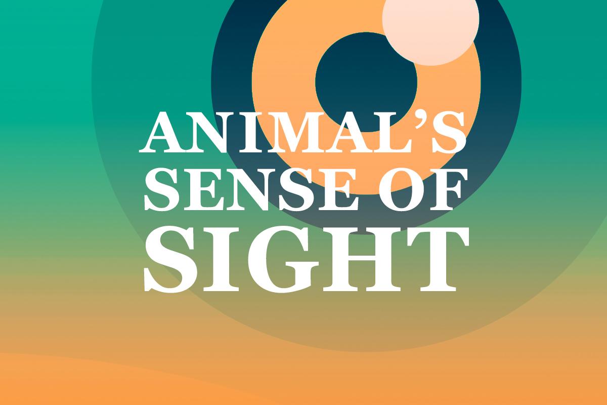 True Or False Quipo Quiz Animals Sense Of Sight