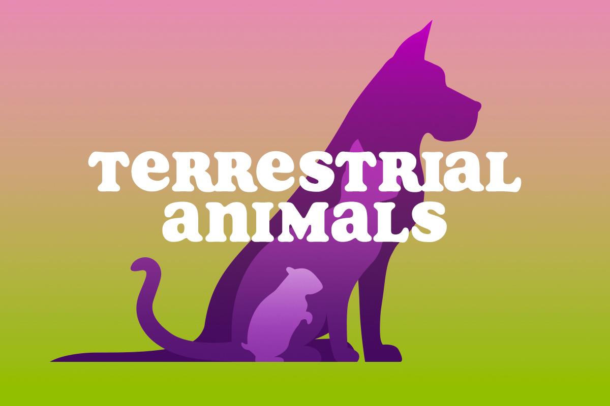 True Or False Quipo Quiz Terrestrial Animals