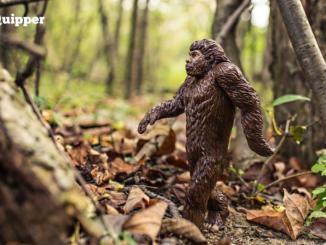 Belajar Contoh Soal Essay Biologi SMA Kelas 12 Bab Teori Evolusi Lengkap dengan Jawabannya!