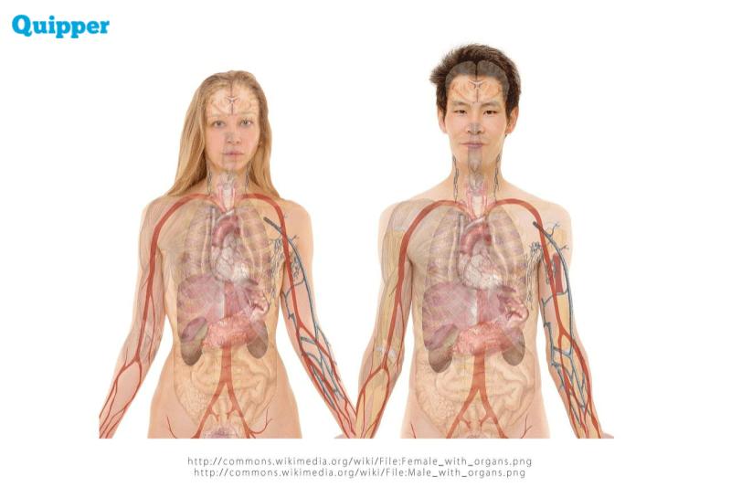 Sistem Sirkulasi Pada Manusia Biologi Kelas 11 Quipper Blog