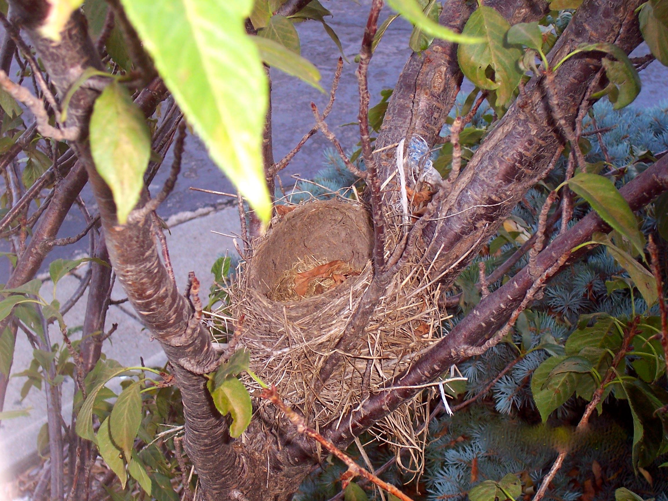 My empty nest...
