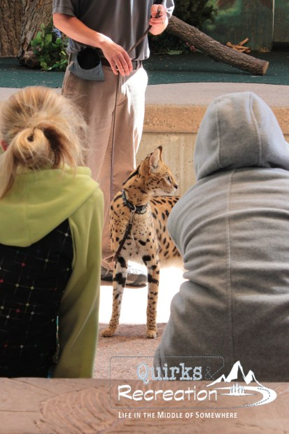 Denver Zoo - Bunk with the Beasts - Wildlife Show