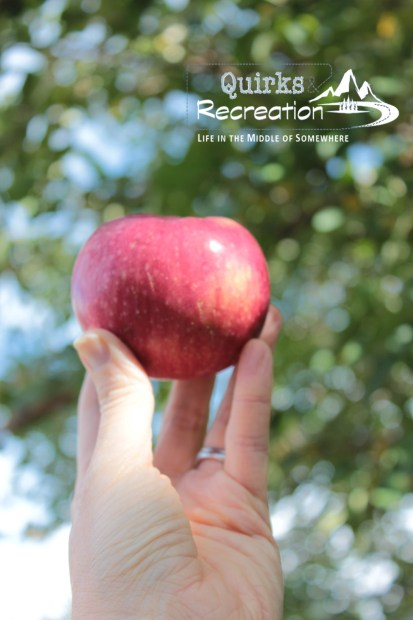 person holding a red apple in her hand