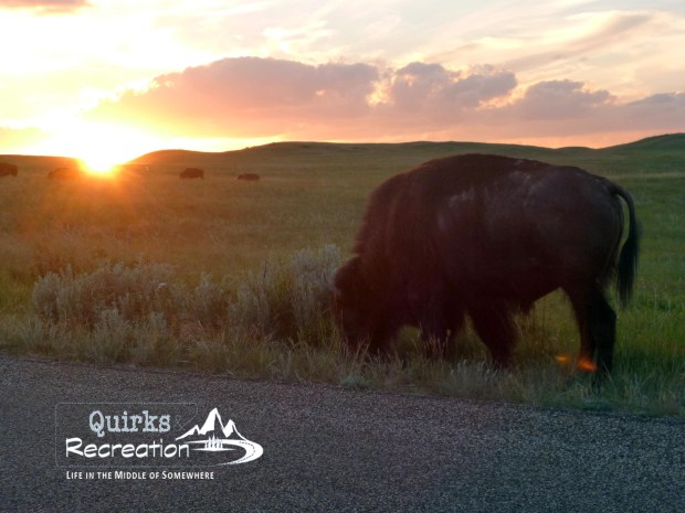 a bison at sunset at Theodore Roosevelt National Park
