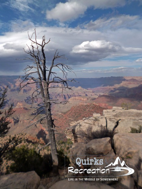 lone tree South Rim Grand Canyon
