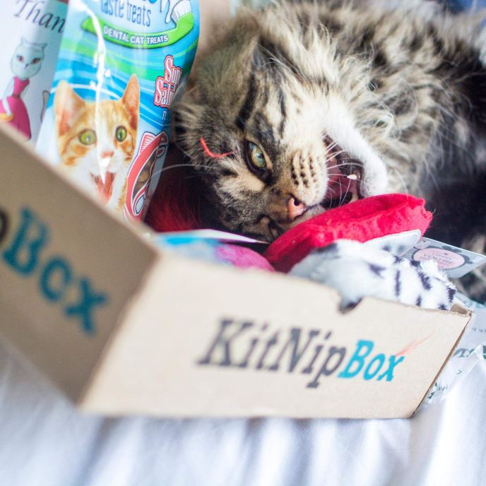 best pet subscription kitnip box
