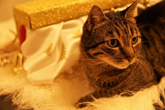 best gifts for cat lovers 2020