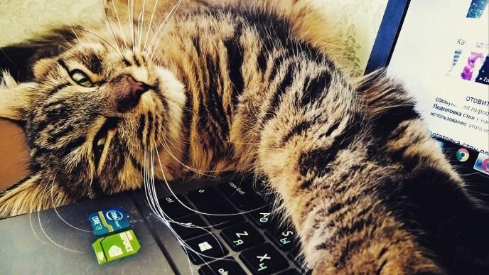 cat youtube videos