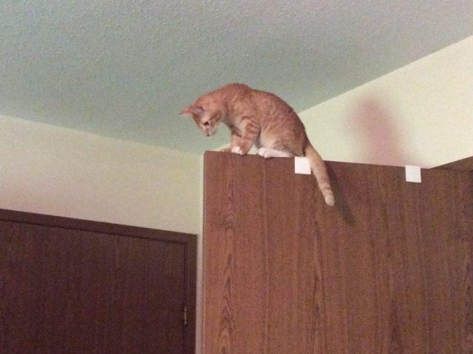 orange tabby cats on door