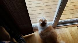 Buddy Foster Cat