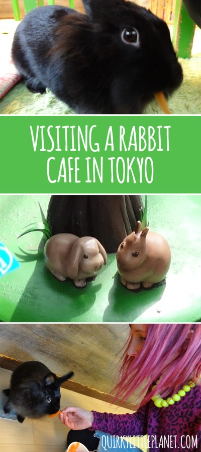 Visiting a rabbit cafe in Tokyo