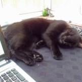 black-cat-asleep-next-to-laptop