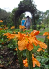 botanical-garden-sri-lanka