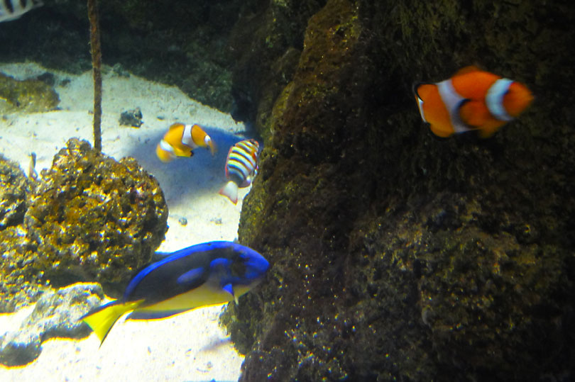 Finding Nemo at the Sea Life Aquarium in London