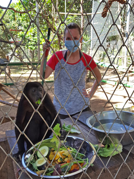 Volunteering in Costa Rica - caring for howler monkeys among other animals.