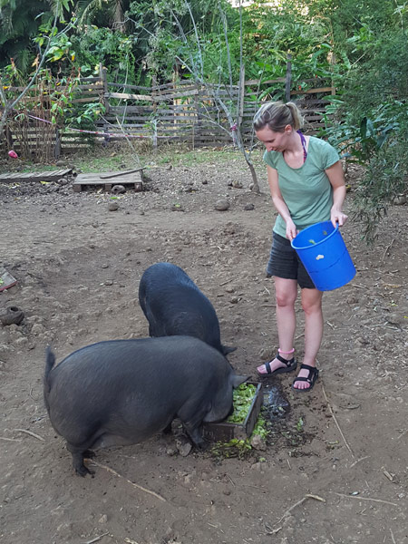 Feeding the resident pigs on a Costa Rican volunteering holiday!
