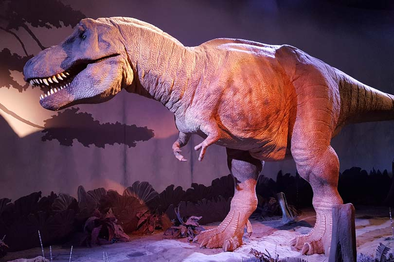 T-Rex at the Natural History Museum in London