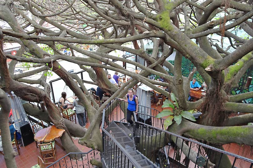 Tree House Restaurant - a quirky dining experience in Santa Elena