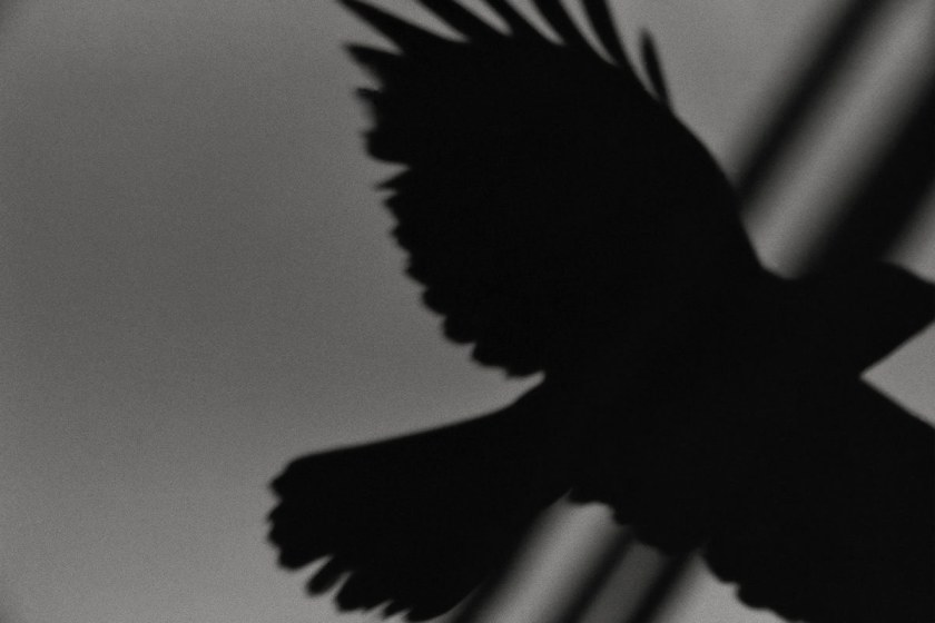 Fotografía © Masahisa Fukase, 'The solitud of ravens
