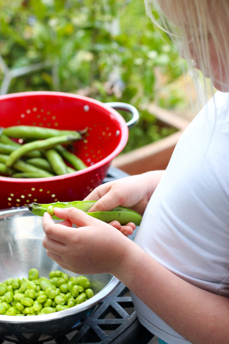 My big girl, podding broad beans.