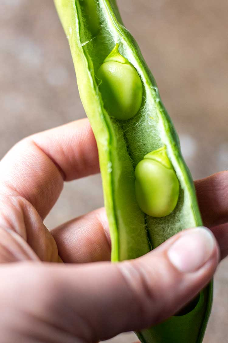 A open broad bean pod, with the beans ready to be removed.