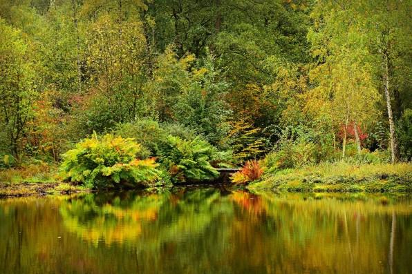 pond-3755338_1920