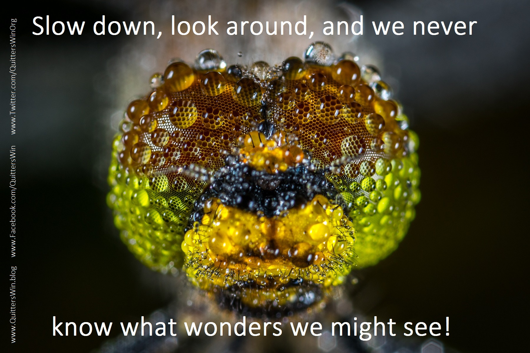 Slow down, look around, and we never know what wonder we might see!