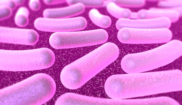 ¿Para qué sirven los análisis bioinformáticos? El caso de la bacteria Escherichia coli
